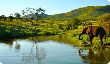 The History of Pilanesberg National Park Image
